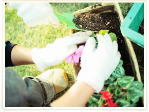 園芸の様子